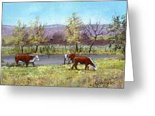 White Face Cows In Pasture Greeting Card