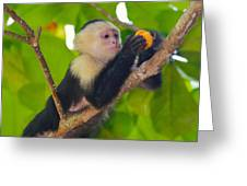 White-faced Capuchin Greeting Card