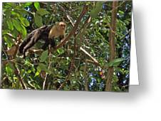 White-faced Capuchin Monkey In Manuel Antonio National Preserve-costa Rica Greeting Card