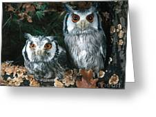 White Faced Scops Owl Greeting Card