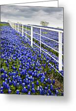 White Fence - Blue Bonnets Greeting Card