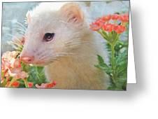 White Ferret Greeting Card