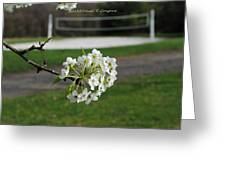 White Florescence Greeting Card