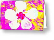 White Flower Cu 4308 8 Greeting Card