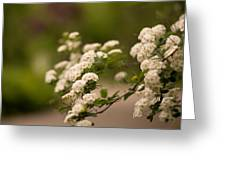 White Flower In The Tree Greeting Card