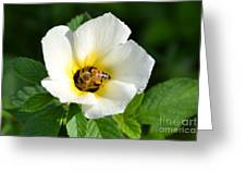 White Flower- Nectar Greeting Card