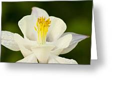 White Flower Greeting Card by Oscar Karlsson