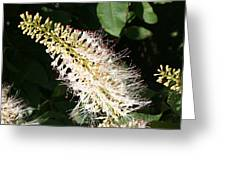 White Flower Panicle Greeting Card