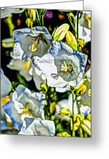 White Flower Spendor Greeting Card