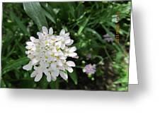 White Flowerettes Greeting Card