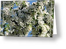 White Flowering Crabapple Tree Greeting Card