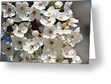White Flowering Tree Flowers Greeting Card
