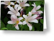 White Flowers 1 Greeting Card