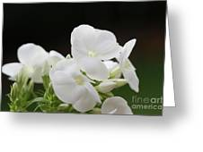 White Flowers 3 Greeting Card