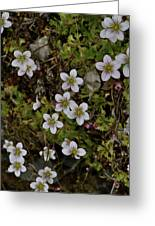 White Flowers And Moss Greeting Card