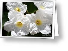 White Flowers In The Desert Greeting Card