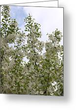 White Flowers On Branches Greeting Card