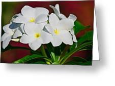 White Frangipani Greeting Card