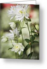 White Frilly Columbines Greeting Card