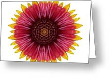 Galliardia Arizona Sun I Flower Mandala White Greeting Card