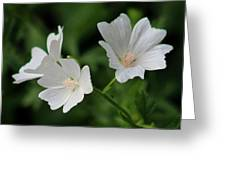White Garden Flowers Greeting Card