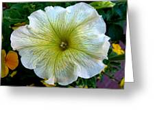 White Garden Petunia Greeting Card
