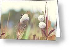 White Garden Snail Greeting Card