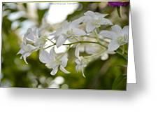 White Gems Greeting Card