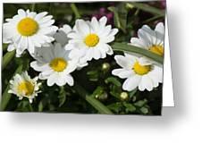 White Gerbera Daisy Greeting Card