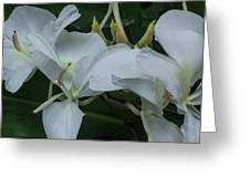 White Ginger Lily Greeting Card