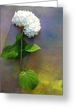 White Glory Greeting Card by George  Page