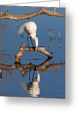 White Heron In The Looking Glass Greeting Card