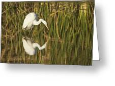 White Heron Staring At The Water Greeting Card