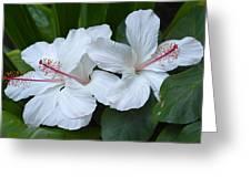 White Hibiscus Trio Waikiki Greeting Card