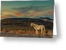 White Horse At Sunset Greeting Card