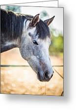 White Horse Head Greeting Card