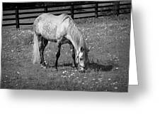 White Horse In A Pasture Among Daisy Flowers Greeting Card