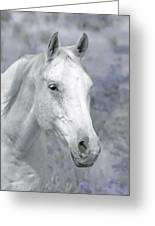 White Horse In Lavender Pasture Greeting Card