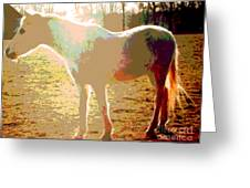 White Horse In The Sun Greeting Card