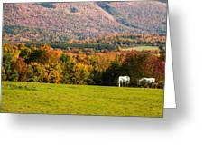 White Horses Grazing With View Of Green Mtns Greeting Card