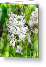 White Hyacinth Flowers Digital Art Greeting Card