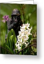 White Hyacinth In The Garden Greeting Card