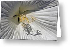 White Hybiscus Close Up Greeting Card