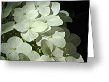 White Hydrangeas Greeting Card