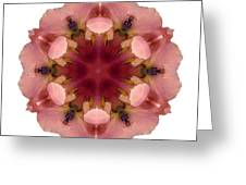 Iris Germanica I Flower Mandala White Greeting Card