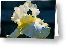 White Iris With Yellow Greeting Card