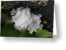 White Jelly  Greeting Card