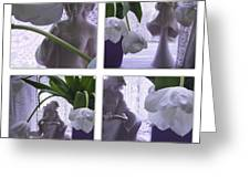 White Lace Picture Window Greeting Card