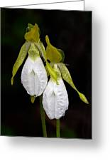 White Lady's Slipper Pair Greeting Card