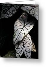 White Leaves Greeting Card